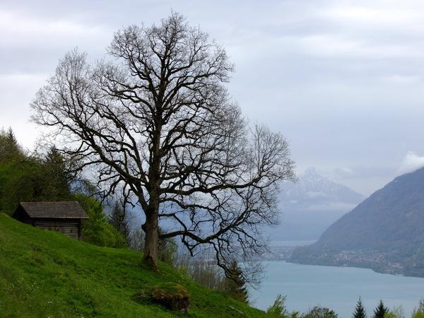 Вид на озеро Brienzersee с Panoramaweg